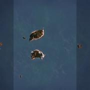 英吉利海峡_5V5夺旗模式