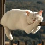 超级不笑猫