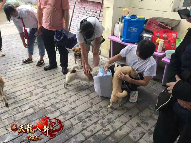 图6:狗子们看见这群有爱心的小哥哥和小姐姐立马就变身撒娇怪